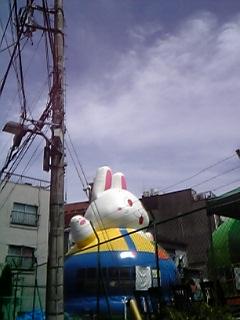 ウサギあらわる!